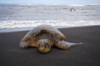 hawai_hone.jpg